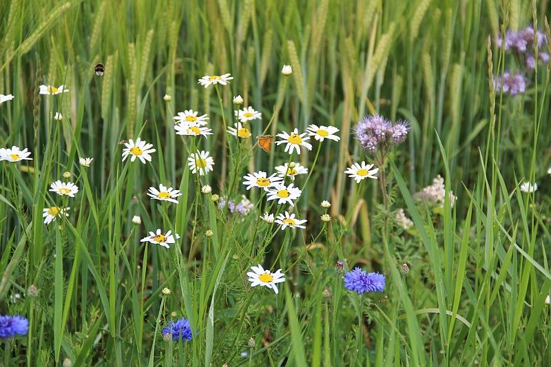 Blommor för bin huvudbild