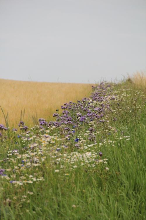 Blommor för bin1